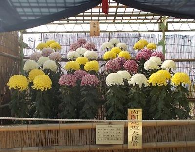 第60回菊花展内閣総理大臣賞